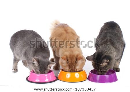 Three cats at food bowl - stock photo