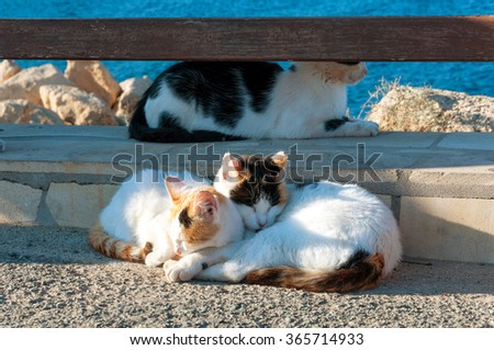 three cats sleep in the wooden fence. Family, relatives or just friends. - stock photo