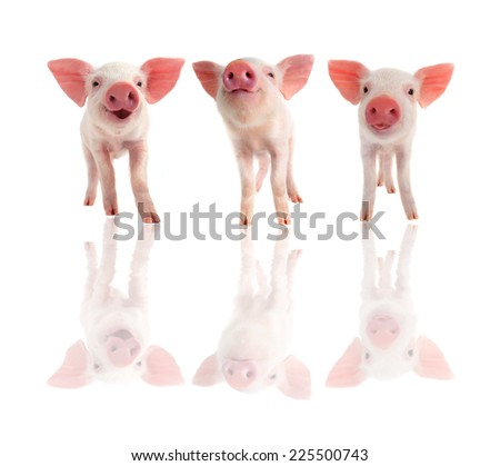 three cheerful  pig on a white background - stock photo