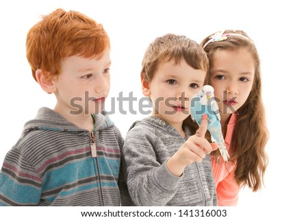 Three children with tame pet budgerigar sitting on hand. Isolated on white. - stock photo