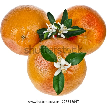 three citrus grapefruit  detail close up top view isolated on white background - stock photo