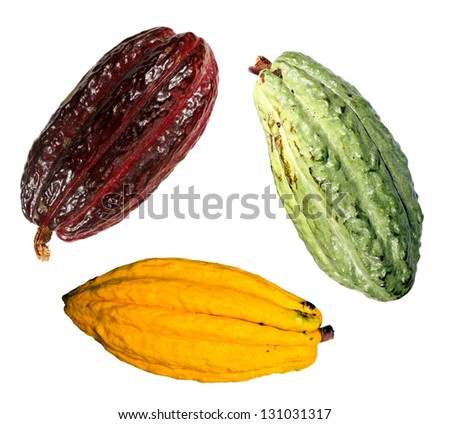 Three cocoa pods (Theobroma cacao) from Ecuador - stock photo