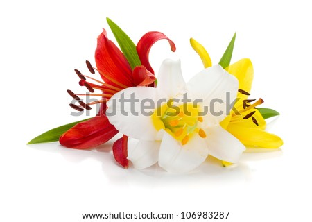 Three colored lily. Isolated on white background - stock photo