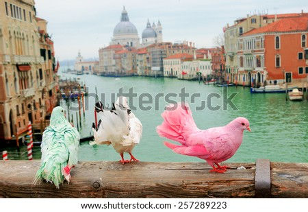 Three colorful pigeons on bridge railing in Venice (Italy). A view from Accademia bridge on Grand Canal and Basilica Santa Maria della Salute. Romantic vacation background. - stock photo