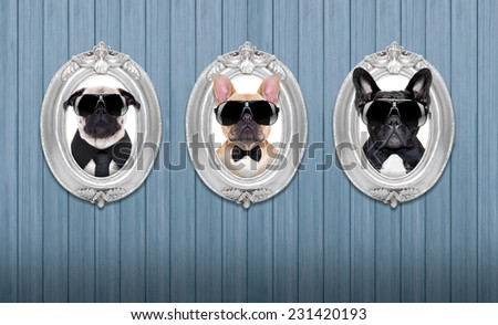 three cool dogs in  frames hanging on a wooden blue wall - stock photo