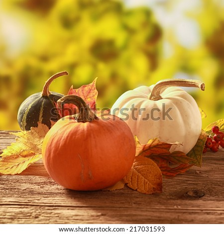Three cucurbita squash and pumpkins in orange, white and variegated colors standing amongst colorful fallen autumn leaves on a rustic wooden table in a golden fall garden - stock photo