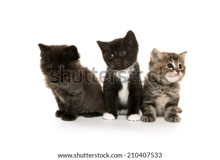 Three cute baby kittens on white background - stock photo