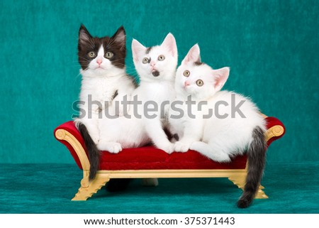 Three cute kittens sitting on miniature chaise couch sofa against green background  - stock photo