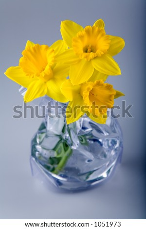 Three daffodil flowers in a modern vase. - stock photo