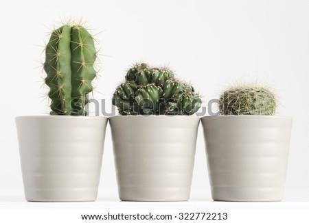 three different cactus on white - stock photo