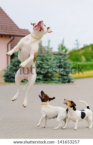 Three dogs playing - stock photo