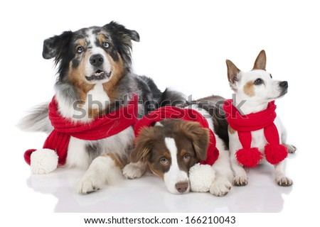 Three dogs xmas - stock photo