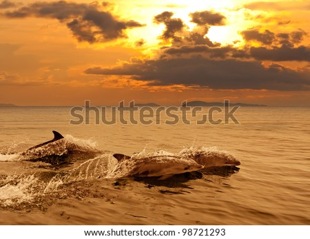 Three dolphins playing in the sunset sea with water splashes - stock photo