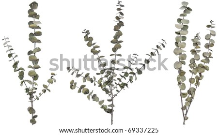 Three dried ornamental branches. Very high-res. Clean edges, no shadows. - stock photo