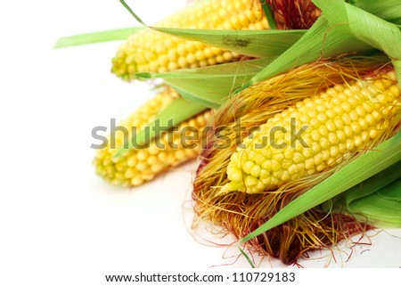 Three ears of corn isolated on a white background corner composition - stock photo