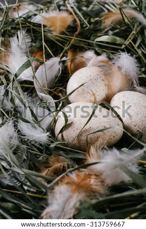Three eggs in a nest of green grass close-up - stock photo