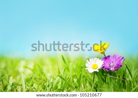 Three flowers on the grass in front of a blue sky - stock photo