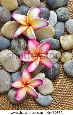 Three frangipani with pile of stones on burlap texture mat - stock photo