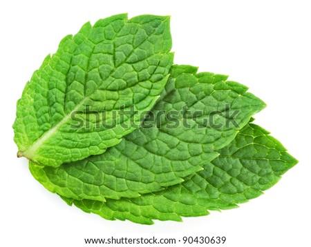 three fresh mint leaves isolated on white background. Studio macro - stock photo