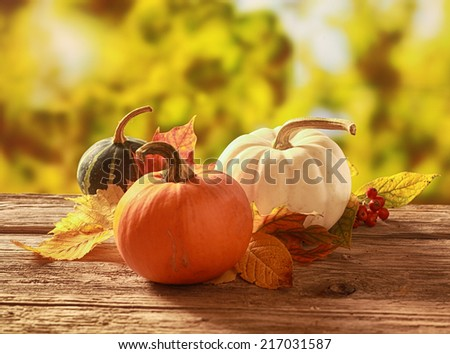 Three fresh pumpkin and squash, one orange, white and variegated green, with fall leaves on a rustic wooden table in a colorful autumn garden - stock photo