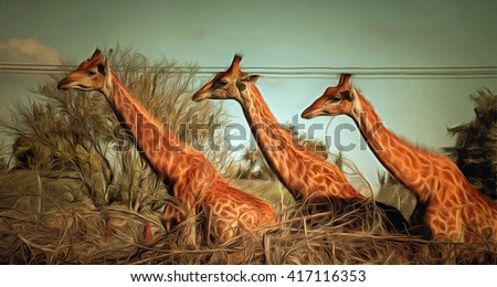 Three giraffes posing  drawing filter - stock photo