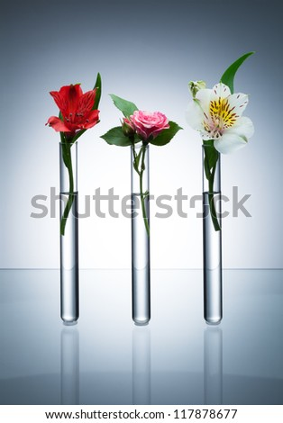Three glass test tubes with different flowers standing in line on grey background with vignette - stock photo