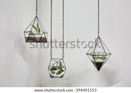 Three glass vases with metallic frames. The vases are hanging on chains on the gray wall background. Inside vases there are plants, ground and pebbles. Close-up photo. Horizontal. - stock photo