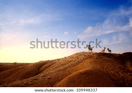 three goats standing in Xinjiang desert,Western China - stock photo