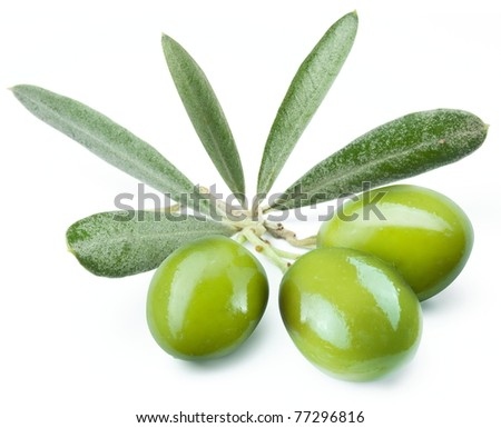 Three green olives on the branch. Object on a white background - stock photo