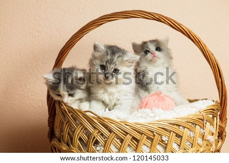 Three grey kittens in a basket with a pink ball of yarn - stock photo