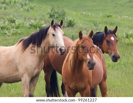 Three Horses and Green Meadow - stock photo