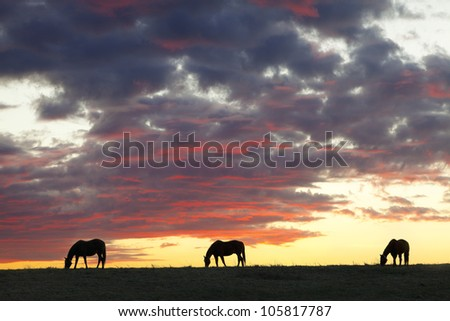 Three horses at sunset - stock photo