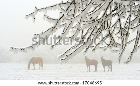 three horses behind a white frosted branches - stock photo
