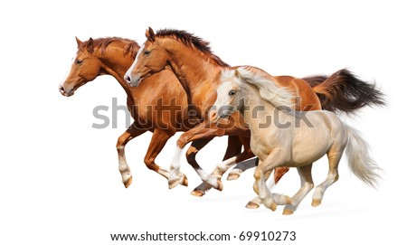 Three horses gallop - isolated on white - stock photo