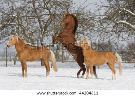 Three horses in snowy landscape - stock photo