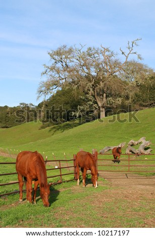 Three horses on a farm - stock photo