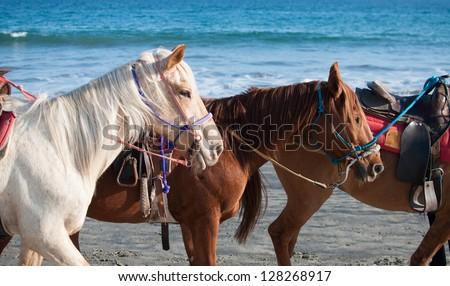 Three horses ready to ride on the beach - stock photo