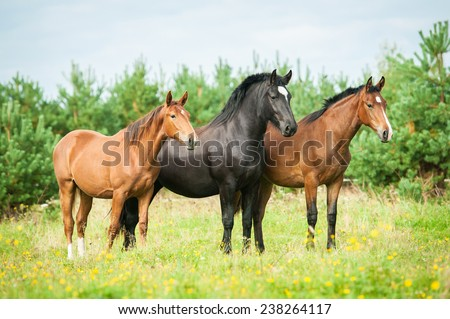 Three horses standing on the field with flowers - stock photo