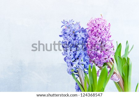 Three hyacinth in the right side of the frame - stock photo