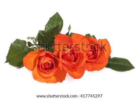 Three isolated bright orange roses on green leafy stems - stock photo