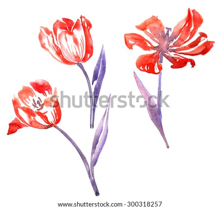 three isolated  watercolor red flowers of tulips with blue leaves, hand drawn design elements, artistic painting illustration - stock photo