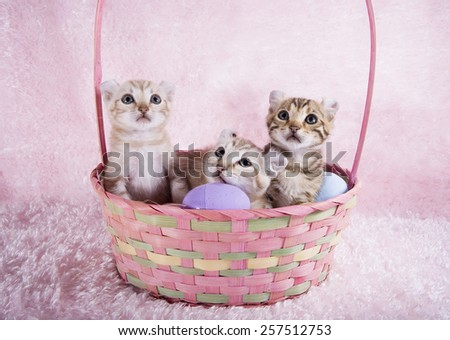 Three kittens in Easter basket with eggs on pink background - stock photo
