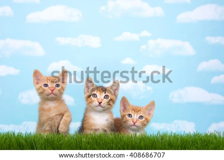 Three kittens in tall grass with blue sky background white fluffy clouds. Looking up. Horizontal presentation with copy space above - stock photo