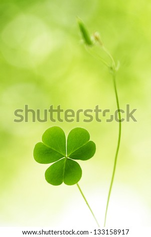 Three leaf clover - stock photo