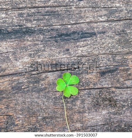 Three-leaf Clovers on grunge old aged wooden background: Shamrock leaves symbolic plant metaphor of Christian Holy Trinity & popular motif in Victorian times: St Patrick's day, Irish festival symbol  - stock photo