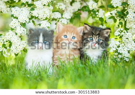 Three little kittens sitting near white flowers - stock photo