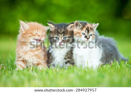 Three little kittens sitting on the lawn in summer - stock photo