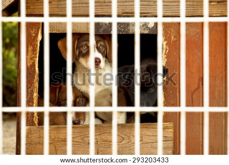 Three little puppies behind bars in a dog shelter. One is sitting, two are lying on the floor of a small doggie house. - stock photo