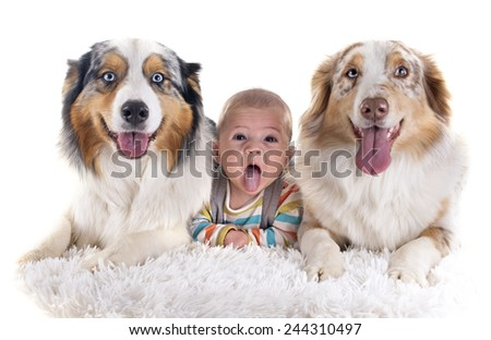 three months baby and dogs in front of white background - stock photo