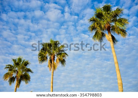 Three palm trees before blue sky with few clouds / Three palms with great green leaves standing alone in front of nice blue sky / Palm tree podium to heaven - stock photo